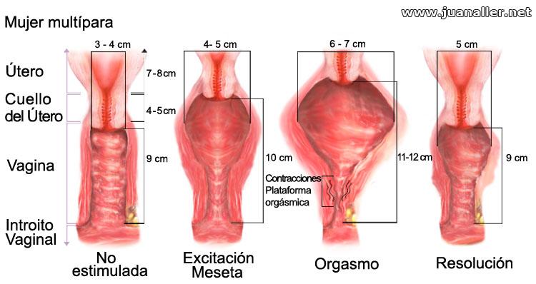 contracciones de vagina real orgasmo femenino - SEXO